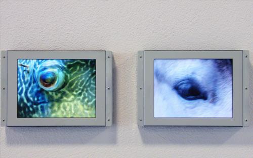 Jean Stern Images/écrans